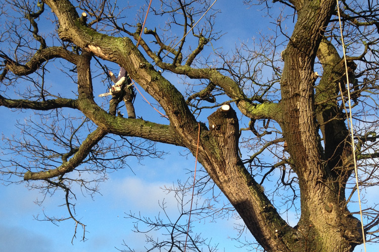 tree-surgeon-preston